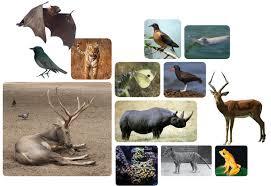 Camino de la sexta extinción | Reportajes | MG Magazine