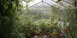 5 x fun vegetable gardens in utrecht
