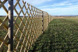 107 Windbreak Fence Photos Free Royalty Free Stock Photos From Dreamstime