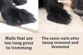 canine nail t aztec clinic