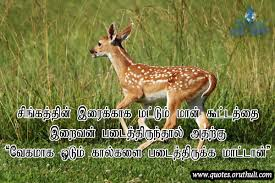 god created the deer only for lion oruthuli quotes