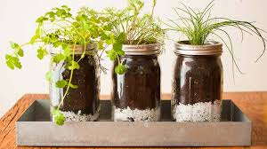 diy mason jar herb garden pass the pistil