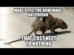 effective homemade rat poison that cost