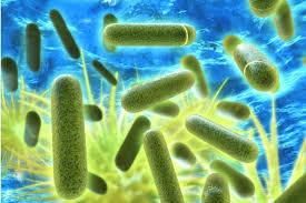 Legionella voorkomen: waar gaat het fout? - Gawalo.nl