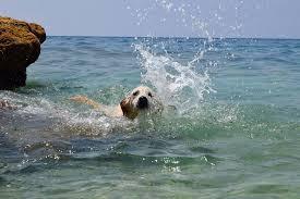 dog sea liveloveanimals livelovedogs blue lebanon animals summer ...