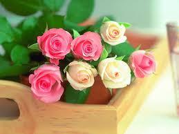 صور زهور جميلة جدا