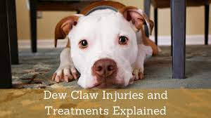 dew claw injuries and treatments
