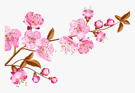 cherry blossom flower flowers nature pink ftestickers