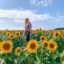 Be like a sunflower even on the darkest day Stand (With images) | Travel,  Sunflower, The darkest