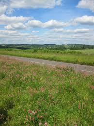 Roadside NR Hilary Phillips | Wild Oxfordshire