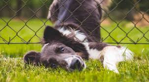 Dog Separation Anxiety Guide