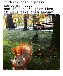 I Think This Squirrel Wants My Nuts And If I Don T Give Them It Will Take Them Anywa Squirrel Meme On Me Me