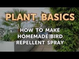 make homemade bird repellent spray