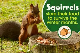 homemade squirrel repellents that are