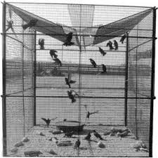 bird traps learn how to