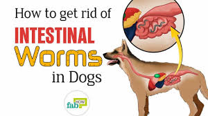 how to get rid of worms in dogs top 3