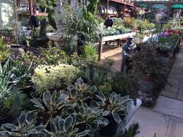 nurseries to discover in san francisco