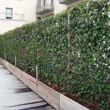 Another Option For Climbing Plants Is To Use The Evergreen English Ivy These Living Fences From Impact Plant Privacy Plants Privacy Landscaping Screen Plants