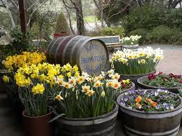 northern california daffodil society