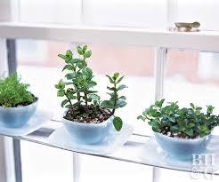 how to grow a kitchen garden better