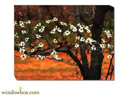 Flowering Dogwood Branches All Weather Wall Art