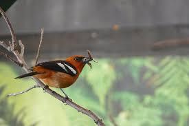 Des très petit au grand oiseaux - Photo de Le Parc des Oiseaux ...