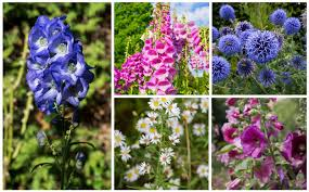 17 tall growing perennials that will
