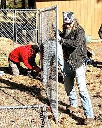 Volunteers Build Fences For Fido Nugget News