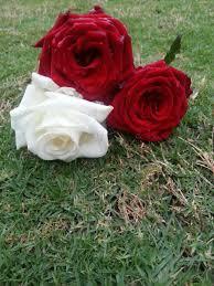 بيع ورد On Twitter صباح الورود والزهور