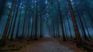 dirt road forest pine trees