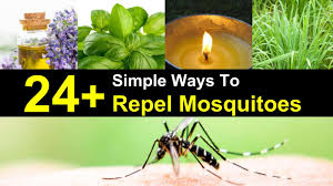 24 simple ways to repel mosquitoes