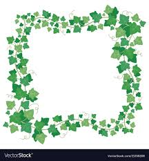 vine ivy green leaves frame climbing