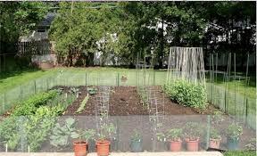 backyard veggie garden ideas outdoor