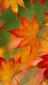 free autumn leaf pattern