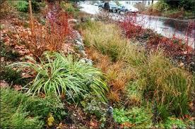 rain garden filters excess water