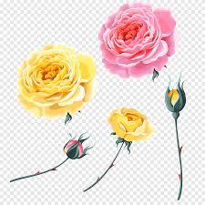 عدة أزهار صفراء و وردية بتلة ورود حديقة وردة الشاطئ أصفر