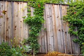 Carpentry Arbors And Fences For Landscaping Growing Image Landscape Marin County And San Francisco Wood Fence Country Home Exteriors Fence