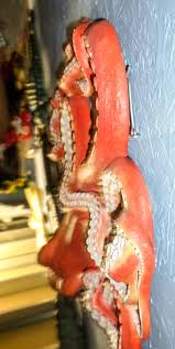 octopus wall decor jr 140096 the