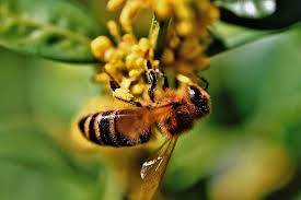 bee, honey bee, blossom, bloom, insect, beekeeping, honey, beehive ...