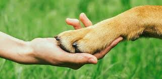why do dogs bite or chew their nails