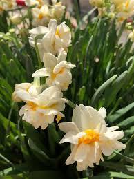 461 Best ورد و زهر Flowers Images In 2020 Beautiful