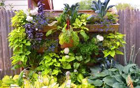 part shade ornamental edible vegetable