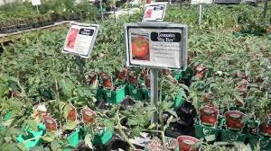 plant a summer vegetable garden