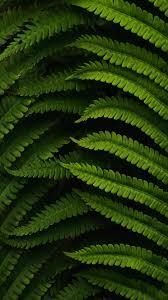 خلفيات ايفون طبيعة خضراء Hd 2020 مربع