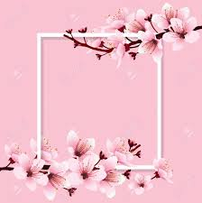 Cherry Blossom Sakura Branch With Pink Flowers On White Frame Royalty Free Cliparts Vectors And Stock Illustration Image 74125010