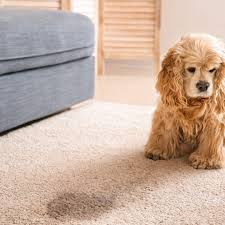 get rid of urine smell on carpeting