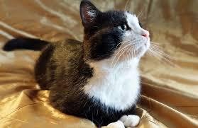 Znalezione obrazy dla zapytania: кот самсон