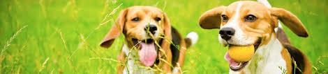 Humane Pet Fence Training