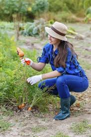 guide to zone 3 vegetable gardening