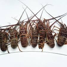 Key West Mini Lobster Season Marina and ...